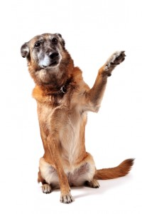 positive dog training online