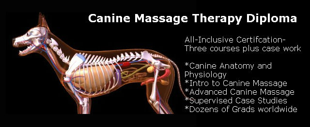 Canine Massage Therapy Certification Earn Yours Online Today