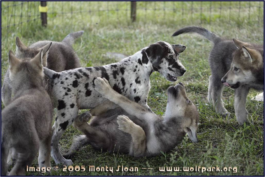 how to train dominant dog