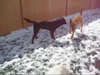 Dog play and interaction