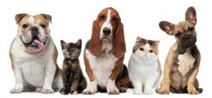 Ethics in Dog Training