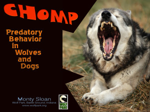 Predatory behavior in dogs