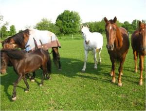 Horse Care Basics
