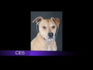 DogSnapshot2