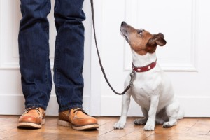 Canine Behavior Consultant online course