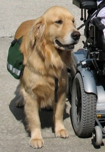 selecting a service dog