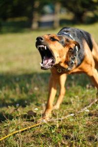 Dog fe