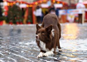 train your dog to do tricks