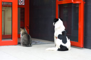 Stray pets cat and dog waiting for some food near butcher's shop