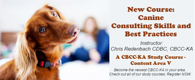 Canine Behavior Consulting and Best Practices