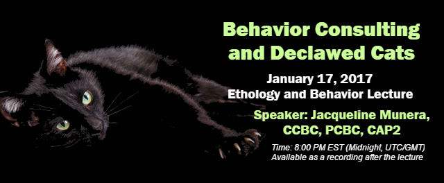 Behavior Consulting and Declawed Cats