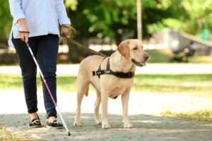 Image result for guide dogs for the blind